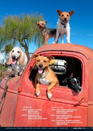 Wine Dogs California