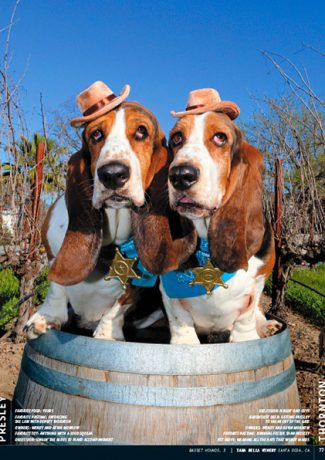 Wine Dogs California