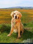 Wine Dogs New Zealand Photo