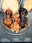 Wine Dogs New Zealand