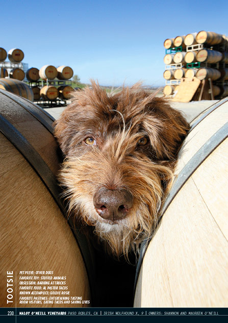 Wine Dogs USA 2