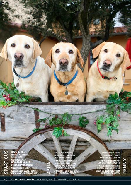 Wine Dogs USA 3