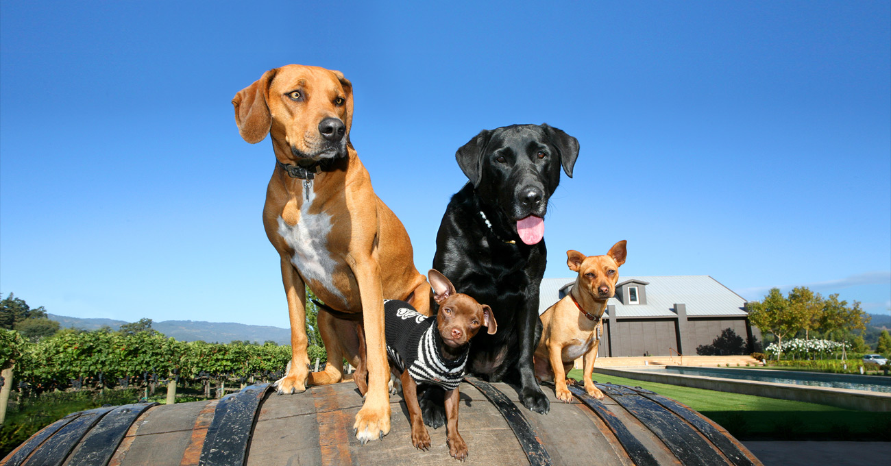 dogs on a wine barrel at Kelham Vineyards