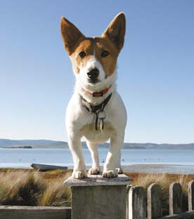 mog the jack russell
