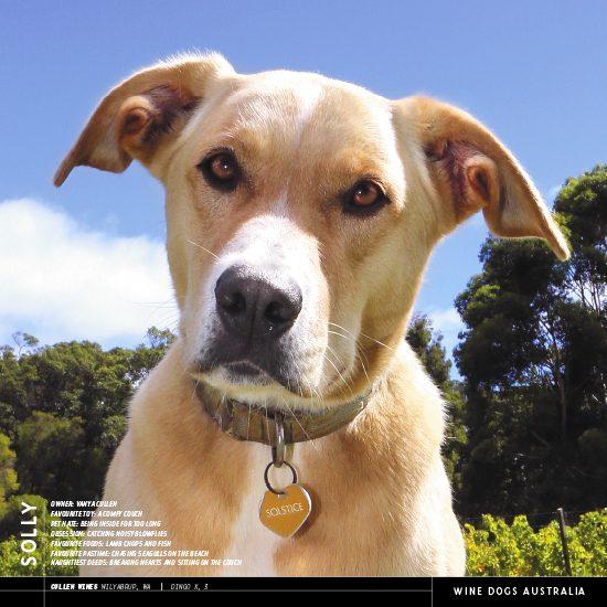 2020 Australian Icons Calendar For Australiana Souvenirs: Wine Dogs Australia 2020 Calendar